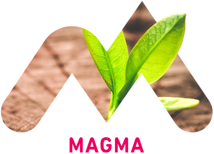 Unternehmensberatung mit Agentur Magma
